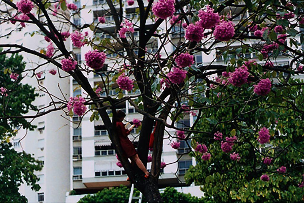 Brígida Baltar, Em uma árvore, em uma tarde, de 2000.